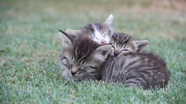 Another-Pile-of-Kittens